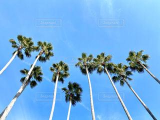 ヤシの木の写真・画像素材[2813618]