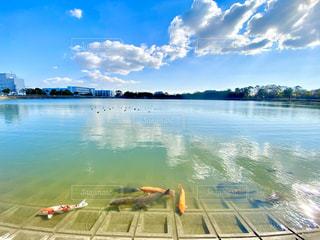 池の写真・画像素材[2841510]