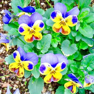 花の写真・画像素材[2878489]