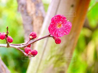 花のクローズアップの写真・画像素材[2930678]