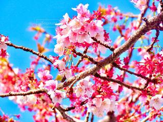 花の写真・画像素材[2970141]