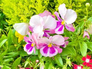 花のクローズアップの写真・画像素材[3248791]