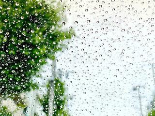 雨粒の写真・画像素材[3309463]