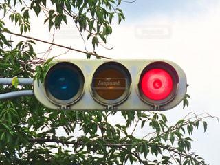 赤信号の写真・画像素材[3445425]