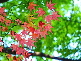 秋の気配の写真・画像素材[3688107]
