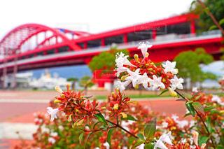 花と神戸大橋の写真・画像素材[3718062]