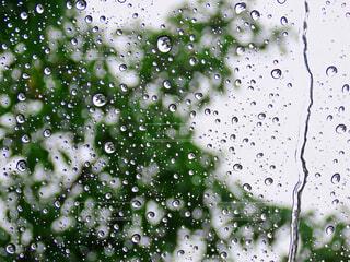 雨粒の写真・画像素材[3721676]