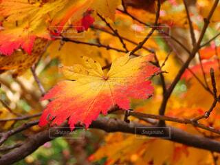 秋の写真・画像素材[3872615]