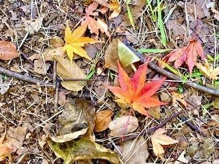 秋の写真・画像素材[3878648]