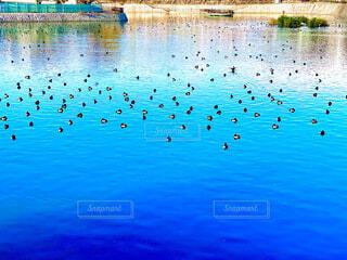 池の写真・画像素材[3988924]