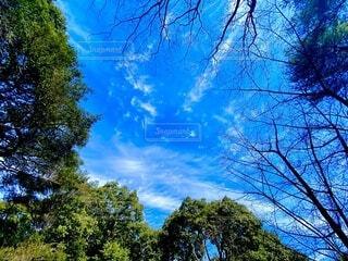 青空と樹木の写真・画像素材[4196850]