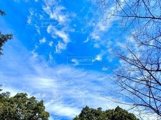空の写真・画像素材[4196851]