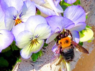 蜂の写真・画像素材[4281069]