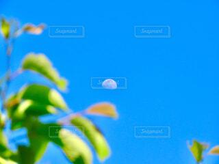 月と葉っぱの写真・画像素材[4354957]