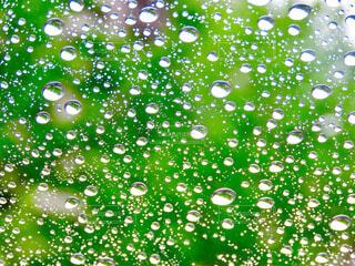 雨粒の写真・画像素材[4369592]