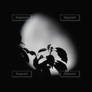 葉っぱのシルエットの写真・画像素材[4759596]