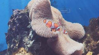 No.676919 魚