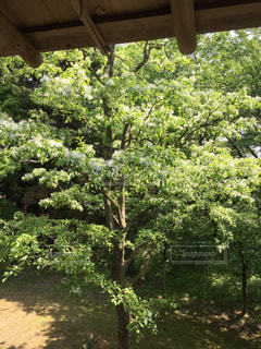 木の写真・画像素材[676716]