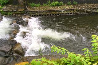 川の写真・画像素材[725340]