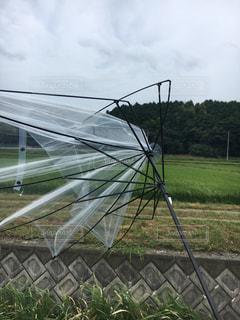 折れた傘の写真・画像素材[756409]