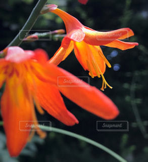 自然の写真・画像素材[679822]