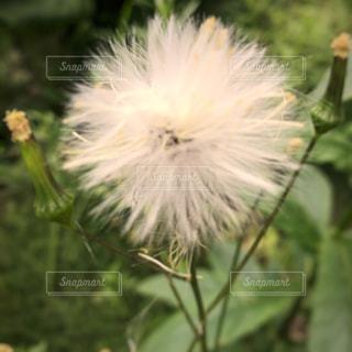 花の写真・画像素材[697903]