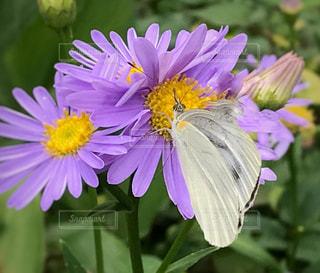 近くの花のアップの写真・画像素材[705439]
