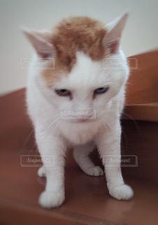 階段で甘える猫 - No.728085