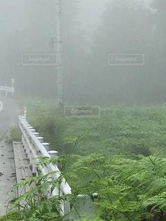 濃霧の中で。の写真・画像素材[808206]