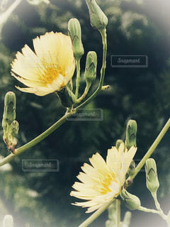 近くの花のアップの写真・画像素材[822532]