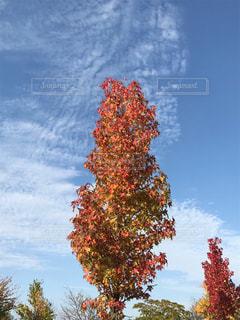 大きな木 - No.825990