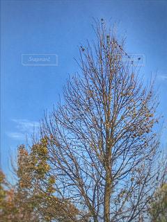 落葉樹と秋空 - No.828223