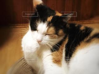 猫の写真・画像素材[831869]