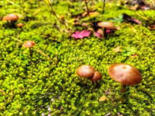 植物の写真・画像素材[859911]
