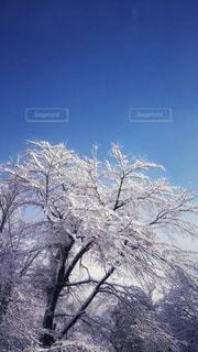 青空の下の写真・画像素材[887776]