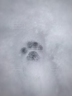 猫の足跡の写真・画像素材[932472]