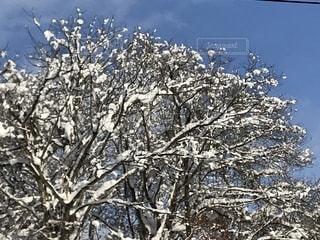 雪に覆われた木 - No.983589
