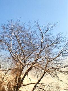 近くの木のアップ - No.1077164