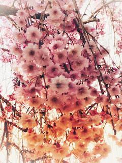 近くの花のアップの写真・画像素材[1132251]