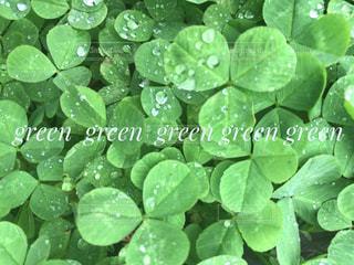 greenの世界の写真・画像素材[1146210]
