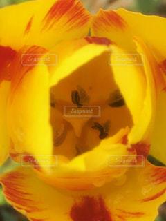 近くの花のアップ - No.1146524