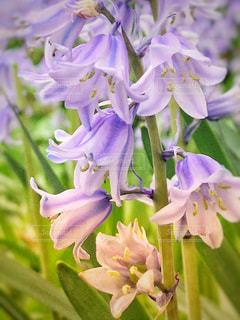 可愛い花の写真・画像素材[1175934]