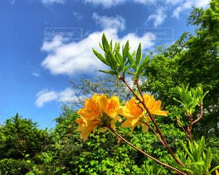 近くの花のアップの写真・画像素材[1182078]
