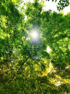 木漏れ日の写真・画像素材[1197074]