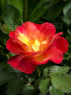 近くの花のアップの写真・画像素材[1244591]