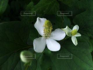 近くの花のアップの写真・画像素材[1278771]