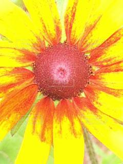 元気いっぱいの花の写真・画像素材[1281033]