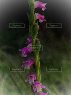 愛らしい花の写真・画像素材[1293766]