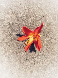 夏の花びらの写真・画像素材[1325158]