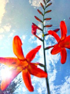 真夏の花の写真・画像素材[1325159]